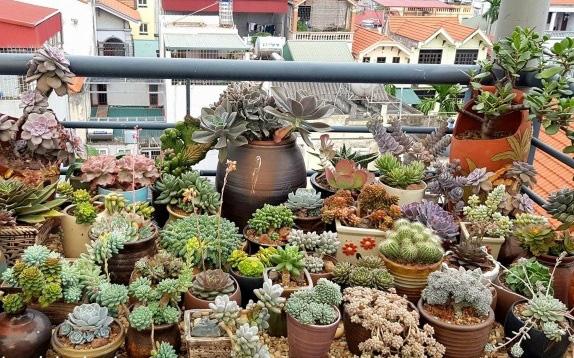 Ai ngờ trồng 6 loại cây này có thể hóa giải phong thủy xấu ở ban công nhà bạn - Ảnh 3.