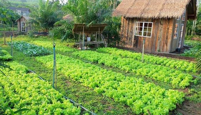 Thủ tục chuyển từ đất vườn sang đất ở năm 2020 - Ảnh 1.