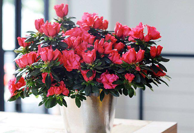 Ai ngờ trồng 6 loại cây này có thể hóa giải phong thủy xấu ở ban công nhà bạn - Ảnh 8.
