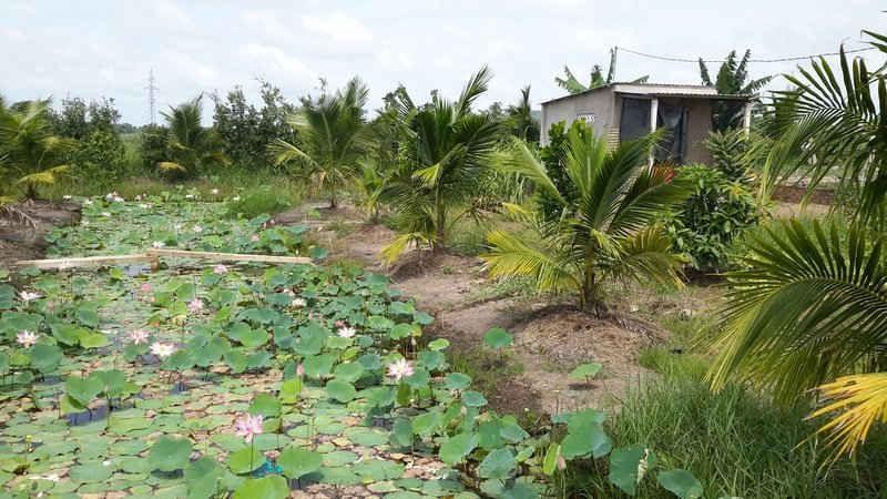 Thủ tục chuyển từ đất vườn sang đất ở năm 2020 - Ảnh 2.