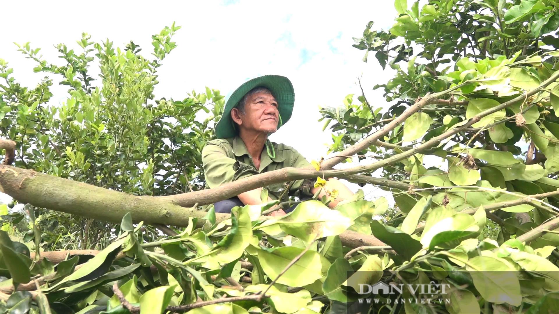 Hậu Giang: Người dân được giao giống bưởi Năm Roi nhưng trồng ra trái bưởi Lông Cổ Cò, đơn vị cung cấp giống xin lỗi - Ảnh 3.