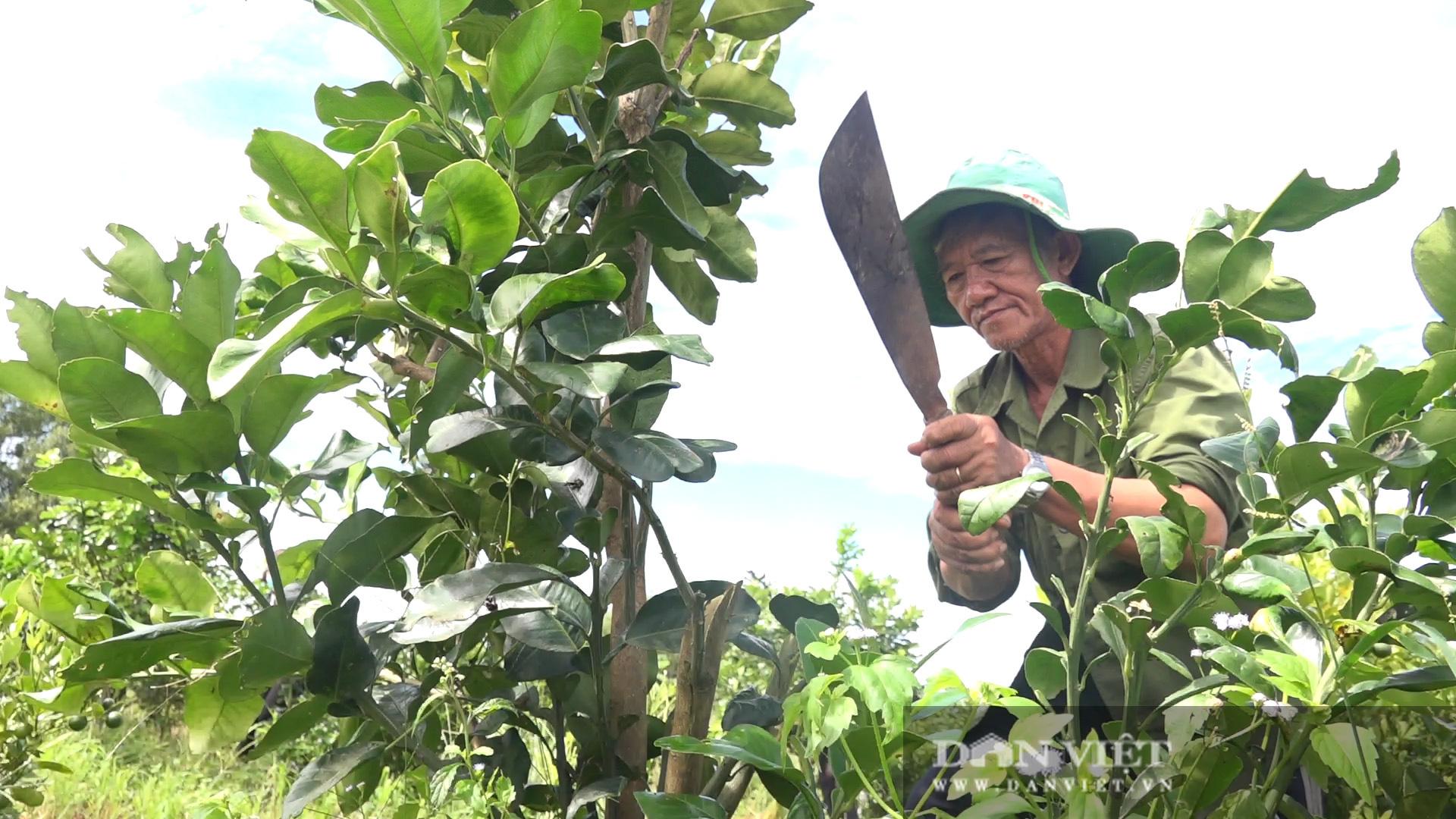 Hậu Giang: Người dân được giao giống bưởi Năm Roi nhưng trồng ra trái bưởi Lông Cổ Cò, đơn vị cung cấp giống xin lỗi - Ảnh 1.