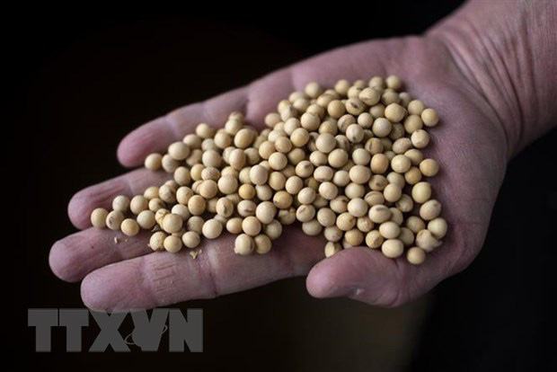 Trung Quốc hoàn thành 71% chỉ tiêu mua nông sản Mỹ - Ảnh 1.