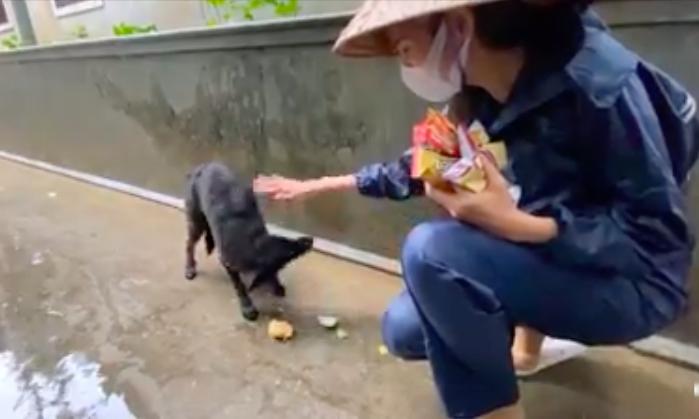 """HOT showbiz: Xúc động clip Thủy Tiên cứu trợ chú chó bị đói rét gây """"bão"""" mạng, Hoài Linh nhận hơn 7 tỷ đồng - Ảnh 4."""