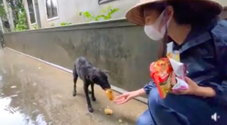 """HOT showbiz: Xúc động clip Thủy Tiên cứu trợ chú chó bị đói rét gây """"bão"""" mạng, Hoài Linh nhận hơn 7 tỷ đồng - Ảnh 3."""