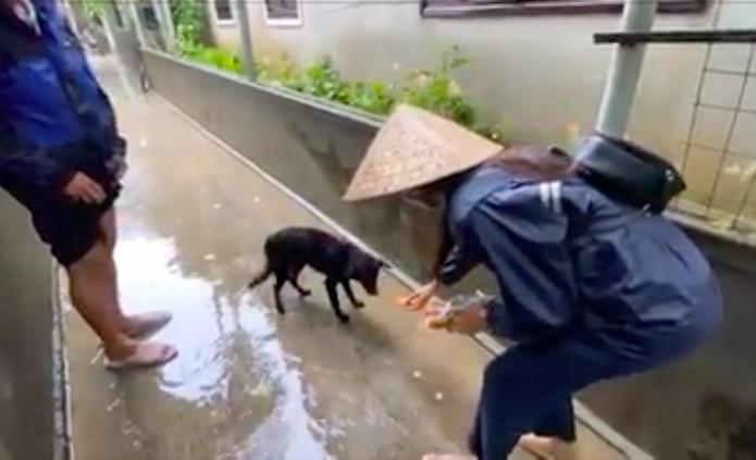 """HOT showbiz: Xúc động clip Thủy Tiên cứu trợ chú chó bị đói rét gây """"bão"""" mạng, Hoài Linh nhận hơn 7 tỷ đồng - Ảnh 2."""