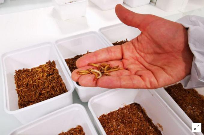 Khởi nghiệp nuôi côn trùng trị giá 224 triệu USD - Ảnh 3.