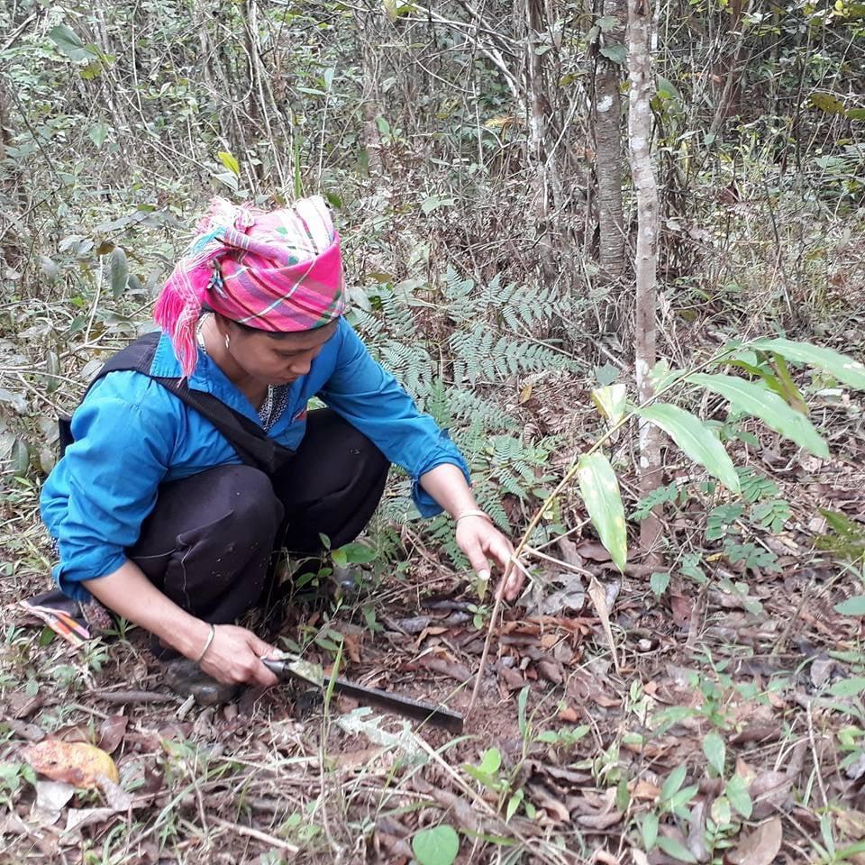 Điện Biên: Không lơ là trong công tác bảo vệ rừng - Ảnh 2.