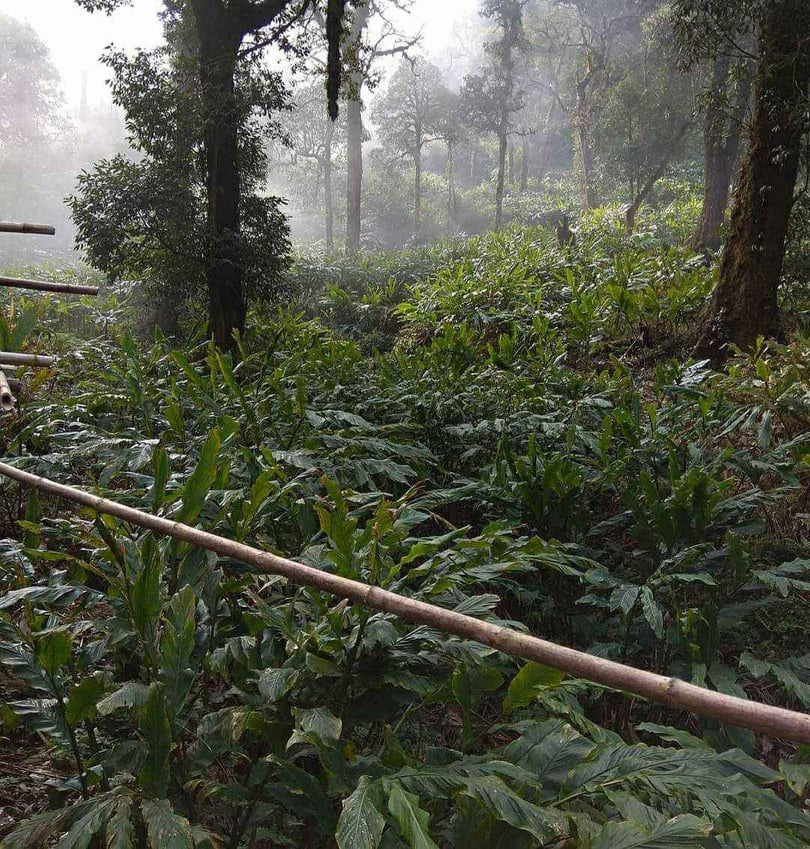 Điện Biên: Không lơ là trong công tác bảo vệ rừng - Ảnh 4.