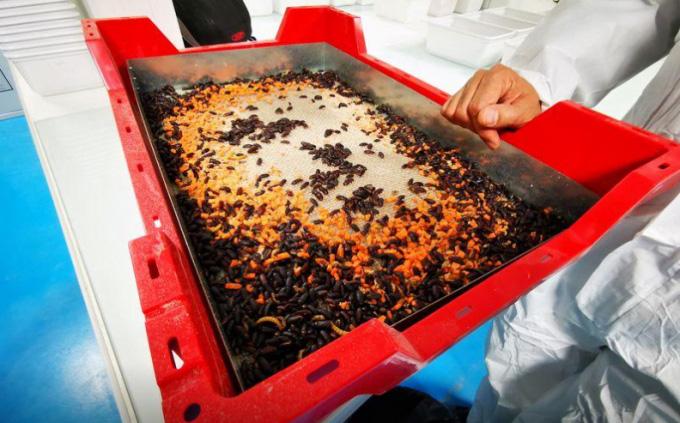 Khởi nghiệp nuôi côn trùng trị giá 224 triệu USD - Ảnh 1.