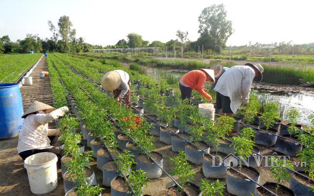 Chịu khó làm nông nghiệp hữu cơ, nông dân Việt xuất đi Mỹ, EU… thu về hàng trăm triệu đô la mỗi năm - Ảnh 2.