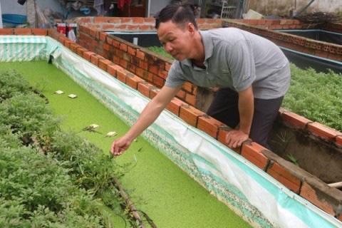 Độc đáo cách nuôi lươn trong bể lót bạt: Dưới thả lươn, trên trồng rau cần, nhìn đẹp mắt mà thu được nhiều tiền hơn - Ảnh 1.