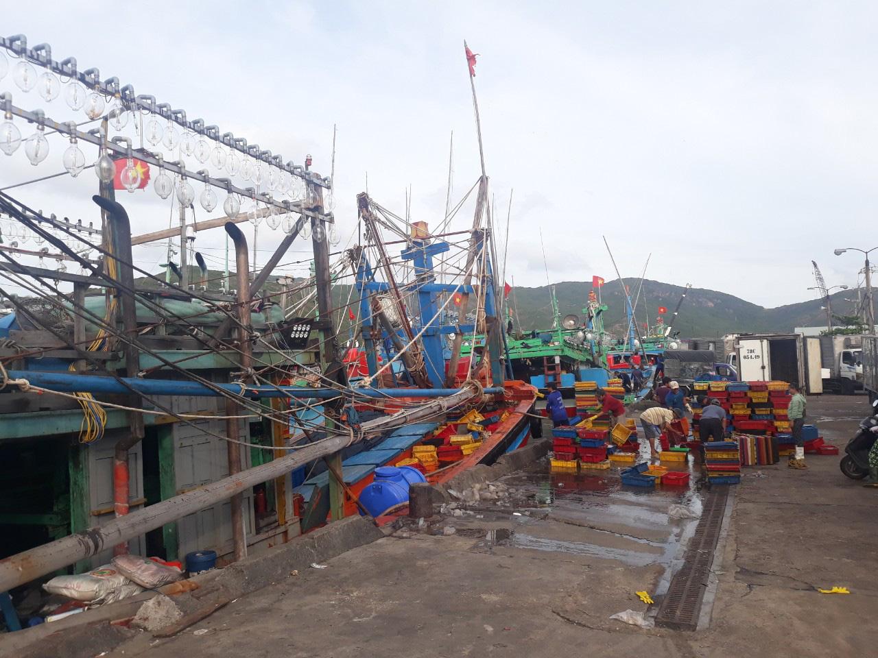 Bão số 9: Bình Định cấm biển, 190 tàu đang di chuyển khỏi vùng nguy hiểm - Ảnh 3.