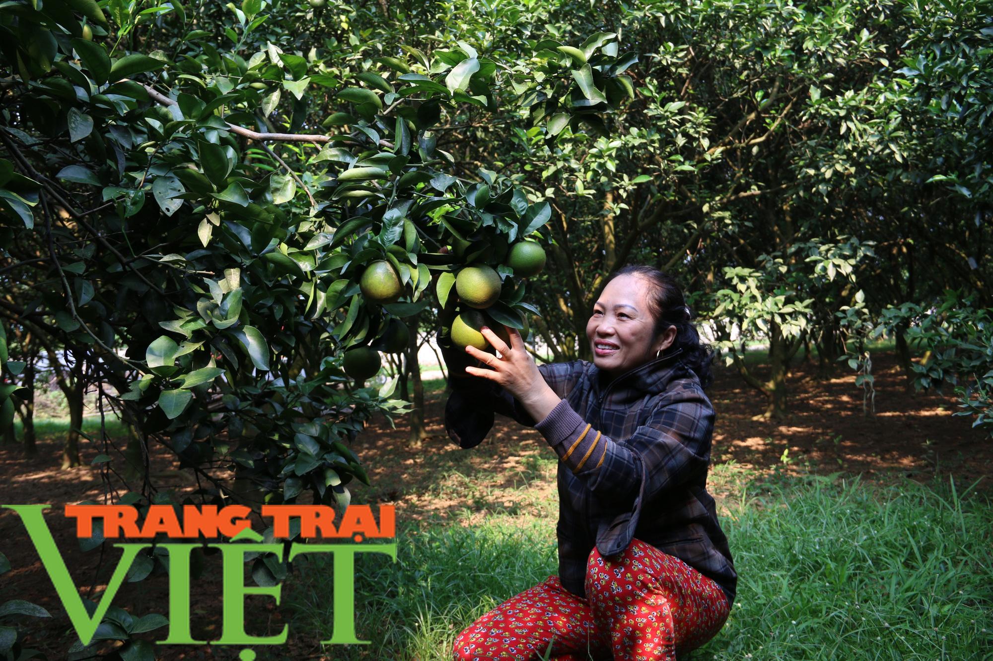 Hòa Bình: Cây ăn quả có múi là sản phẩm chủ lực khẳng định vị thế trên thị trường - Ảnh 4.
