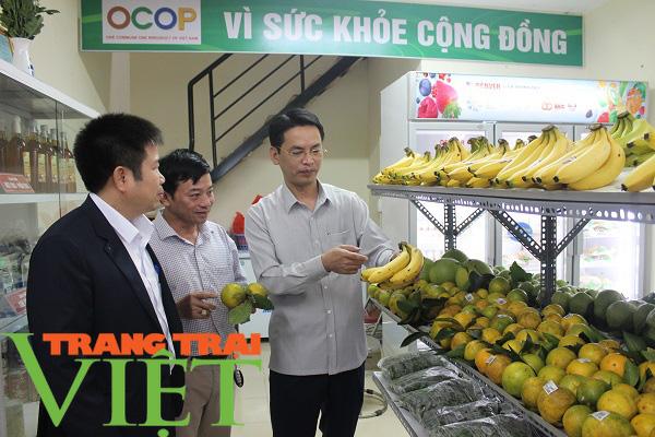 Hòa Bình: Cây ăn quả có múi là sản phẩm chủ lực khẳng định vị thế trên thị trường - Ảnh 1.