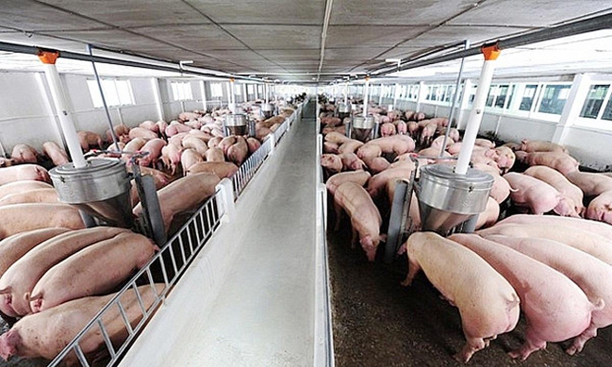 """Ngành chăn nuôi: Lợi nhuận lớn """"nhanh như thổi"""", bán trứng giỏi như tỷ phú - Ảnh 1."""
