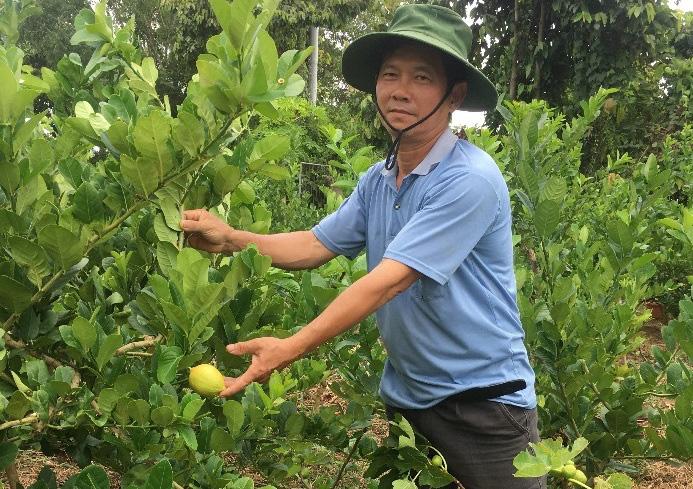 """""""Liều"""" trồng những loài cây lạ, một nông dân tỉnh Bà Rịa-Vũng Tàu bán trái cũng đắt mà bán giống nhiều người mua - Ảnh 1."""