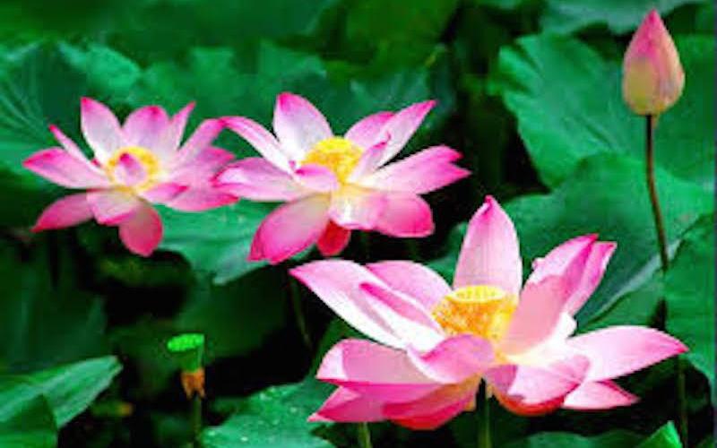 Đặt 5 loài hoa phong thủy rực rỡ, bày trong nhà vừa nhìn đã thấy vận may tỏa sáng - Ảnh 1.