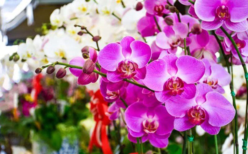 Đặt 5 loài hoa phong thủy rực rỡ, bày trong nhà vừa nhìn đã thấy vận may tỏa sáng - Ảnh 2.