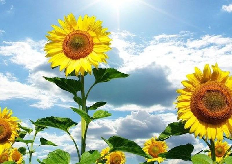 Đặt 5 loài hoa phong thủy rực rỡ, bày trong nhà vừa nhìn đã thấy vận may tỏa sáng - Ảnh 3.