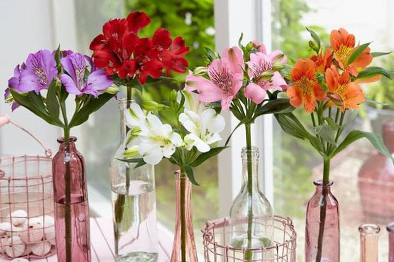 Đặt 5 loài hoa phong thủy rực rỡ, bày trong nhà vừa nhìn đã thấy vận may tỏa sáng - Ảnh 4.