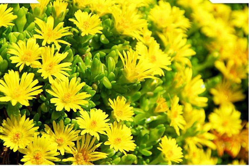 Đặt 5 loài hoa phong thủy rực rỡ, bày trong nhà vừa nhìn đã thấy vận may tỏa sáng - Ảnh 5.
