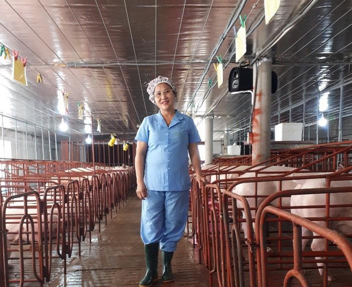 Quảng Trị: Nuôi lợn giống công nghệ cao kiểu gì mà một bà chủ trang trại thu hơn 23 tỷ mỗi năm? - Ảnh 1.