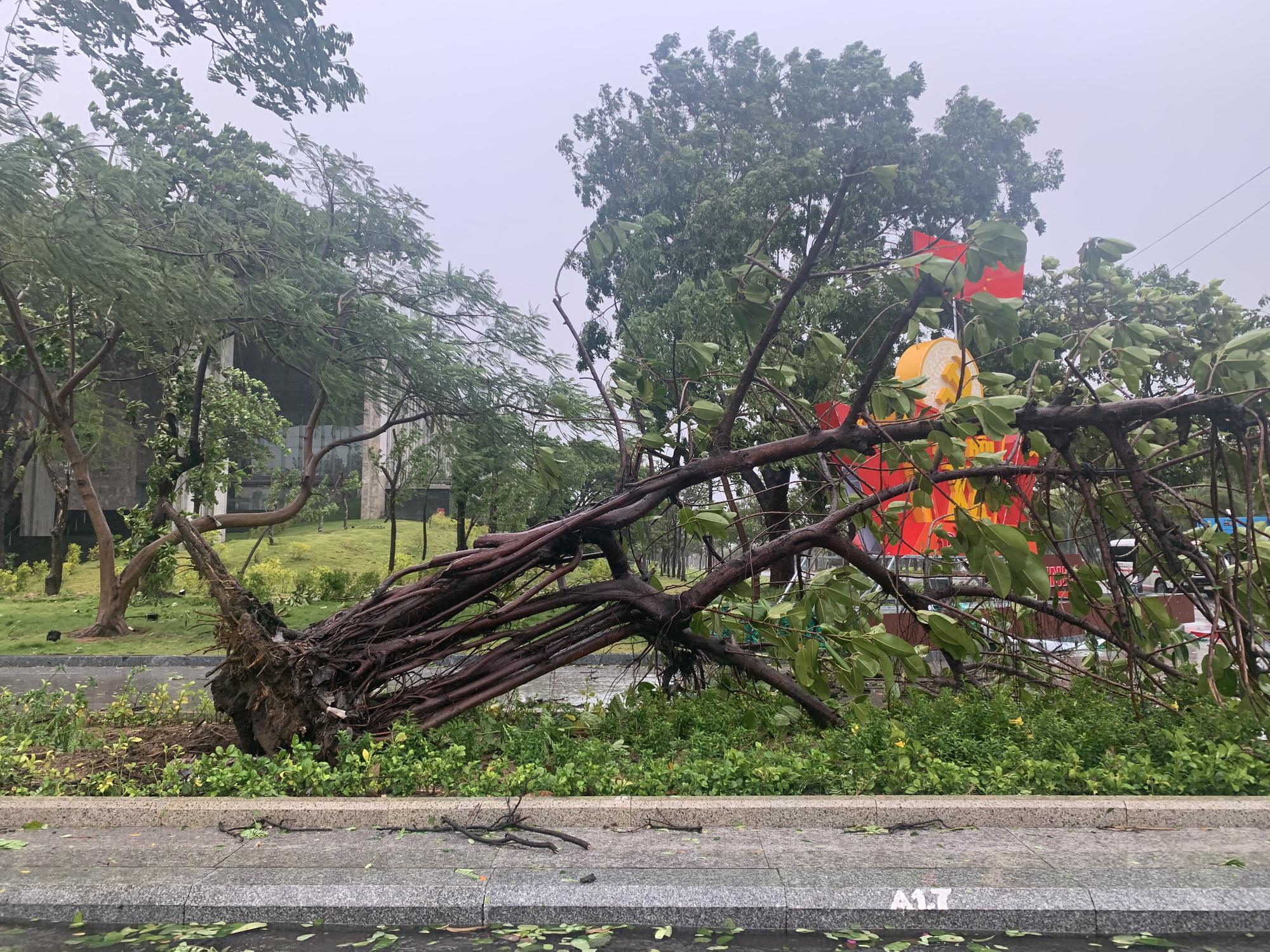 """Bình Định """"cấp tốc"""" dọn dẹp thiệt hại do bão số 9 - Ảnh 8."""