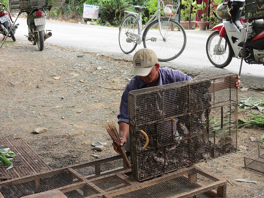 An Giang: Những cái chợ tự phát tất bật mua bán loài gặm nhấm làm ra những món đặc sản nhiều người săn lùng - Ảnh 1.