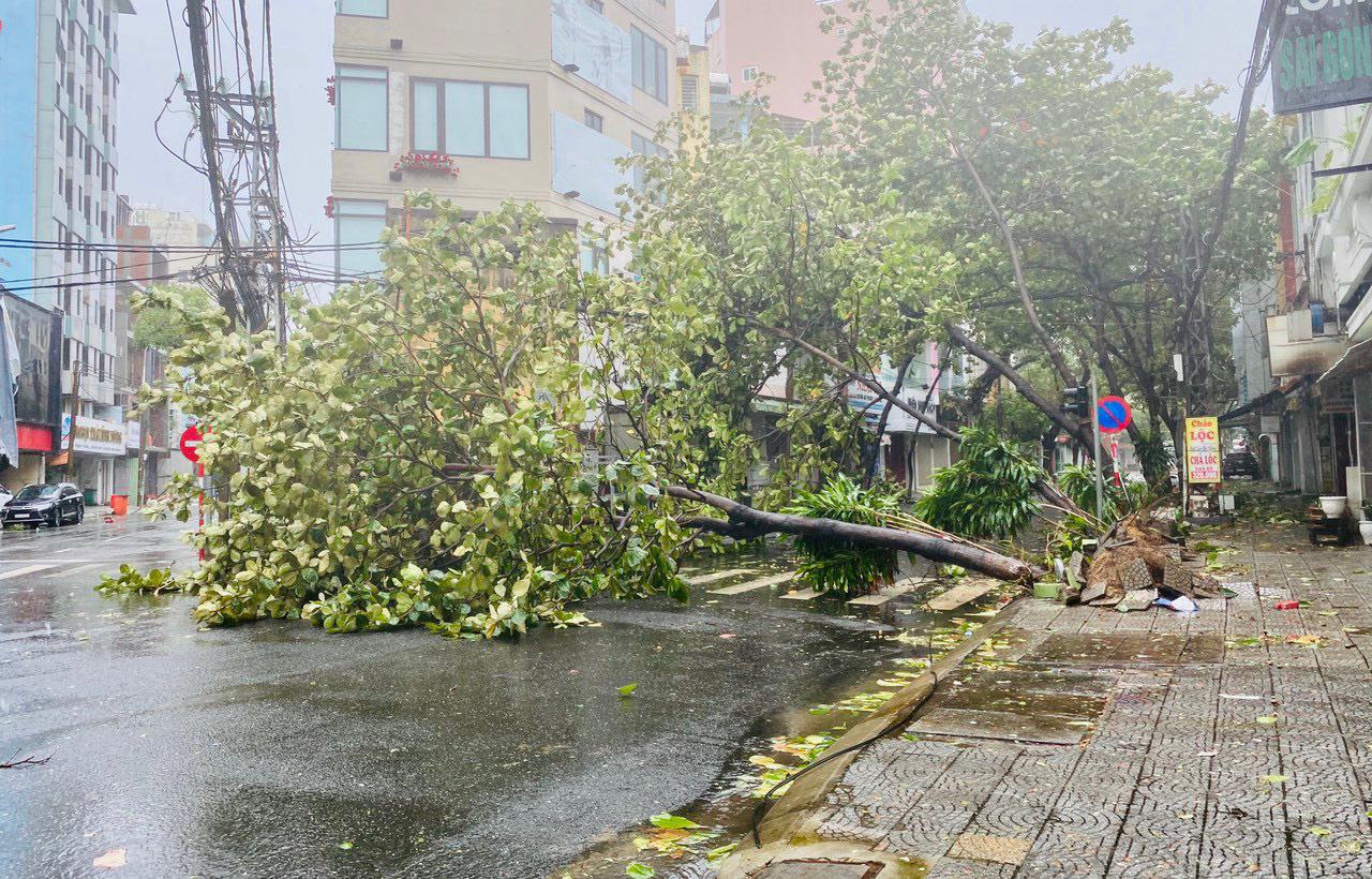 """Bãi """"chiến trường"""" mà bão số 9 tràn qua và để lại ở Đà Nẵng, Quảng Nam, Quảng Ngãi - Ảnh 13."""