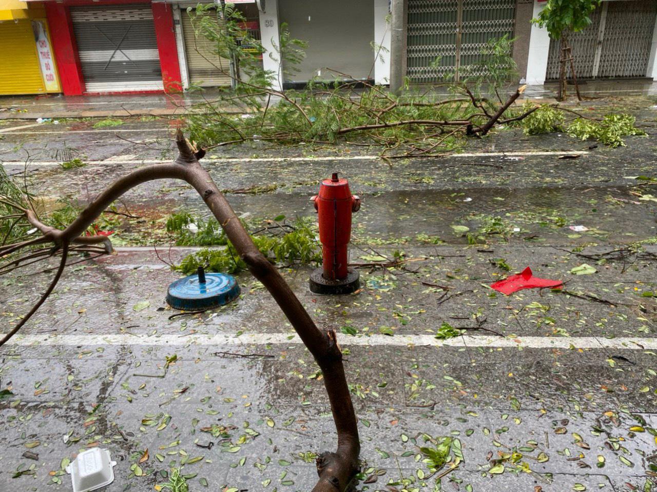 """Bãi """"chiến trường"""" mà bão số 9 tràn qua và để lại ở Đà Nẵng, Quảng Nam, Quảng Ngãi - Ảnh 15."""