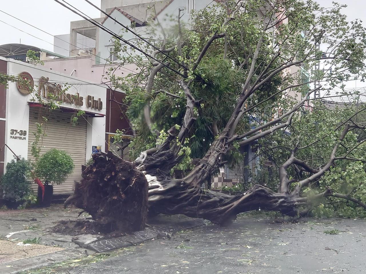 """Bãi """"chiến trường"""" mà bão số 9 tràn qua và để lại ở Đà Nẵng, Quảng Nam, Quảng Ngãi - Ảnh 16."""