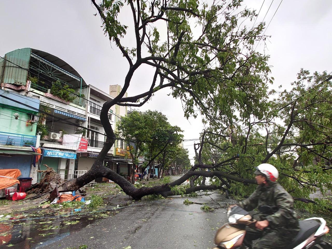 """Bãi """"chiến trường"""" mà bão số 9 tràn qua và để lại ở Đà Nẵng, Quảng Nam, Quảng Ngãi - Ảnh 19."""
