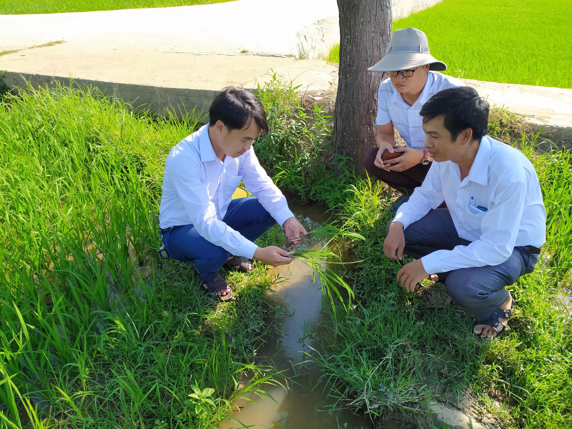 Quảng Nam: Hội Nông dân Điện Bàn – Điểm tựa cho bà con nông dân - Ảnh 3.