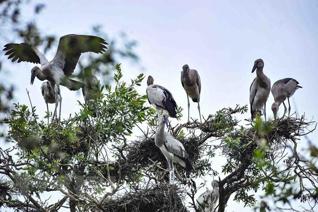 Đồng Tháp: 13 loài chim quý hiếm có nguy cơ tuyệt chủng là những loài chim gì? - Ảnh 1.