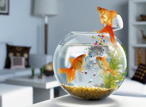 5 điều kiêng kỵ khi bài trí bể cá trong nhà giúp gia chủ vượng tài, vượng lộc, làm ăn phát tài - Ảnh 1.
