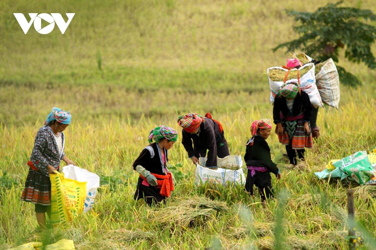 Người dân Lai Châu thu nhập hàng trăm triệu đồng từ sản xuất nông nghiệp - Ảnh 1.