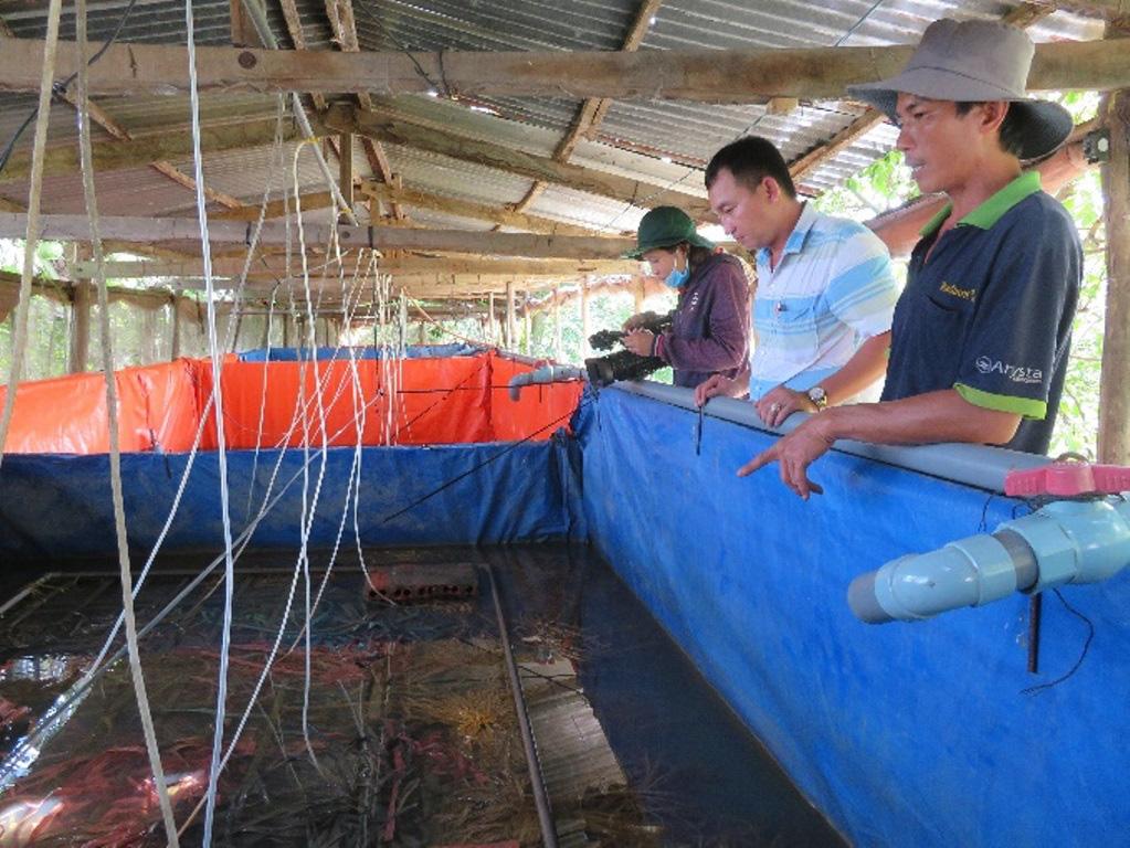 """An Giang: """"Liều"""" nuôi lươn không bùn công nghệ cao dày đặc trong 7 bể lót bạt, bắt bán toàn to bự, nặng nửa ký/con - Ảnh 1."""