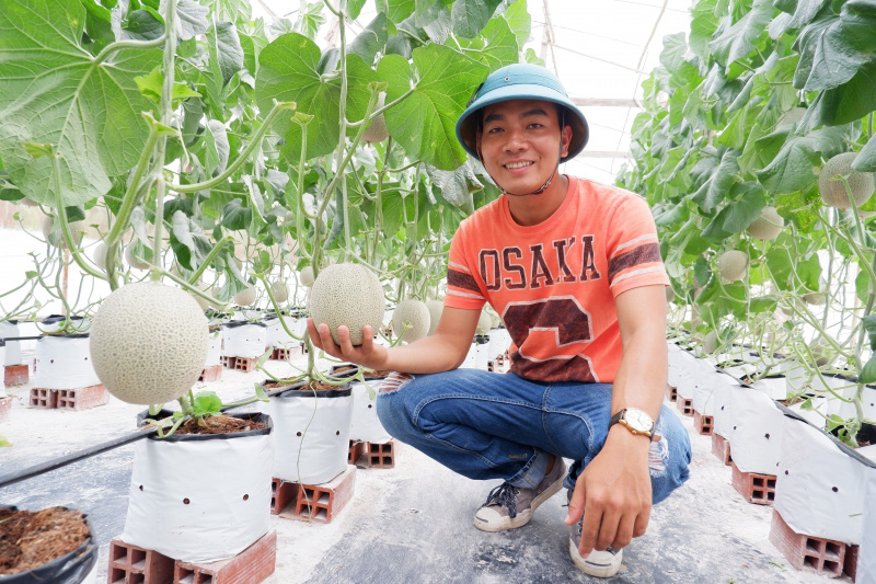 Bến Tre: Trai trẻ trồng dưa lưới Thái Lan ứng dụng nông nghiệp công nghệ cao, trái nào cũng đẹp, bán đắt hàng - Ảnh 1.