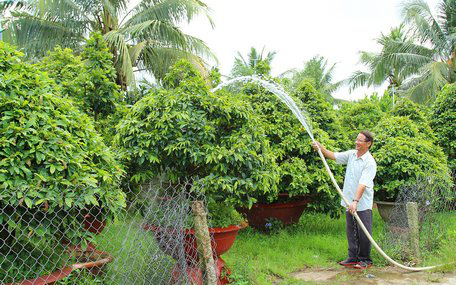 """Có 3ha """"đất vàng"""", làng này trồng loài cây gì mà chưa đến Tết đã lãi 20 tỷ đồng? - Ảnh 1."""