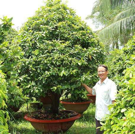 """Có 3ha """"đất vàng"""", làng này trồng loài cây gì mà chưa đến Tết đã lãi 20 tỷ đồng? - Ảnh 4."""