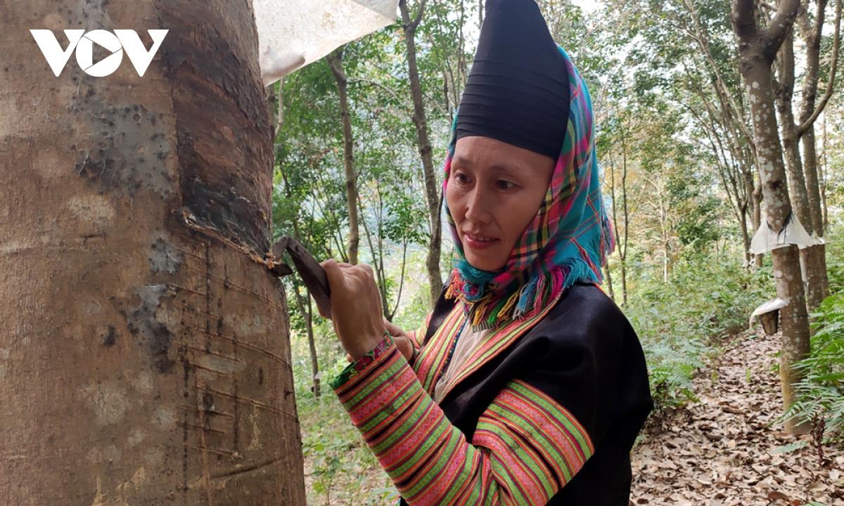 Người dân Lai Châu thu nhập hàng trăm triệu đồng từ sản xuất nông nghiệp - Ảnh 2.