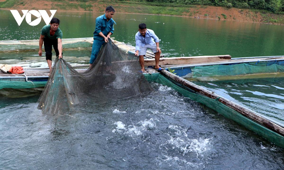 Người dân Lai Châu thu nhập hàng trăm triệu đồng từ sản xuất nông nghiệp - Ảnh 3.