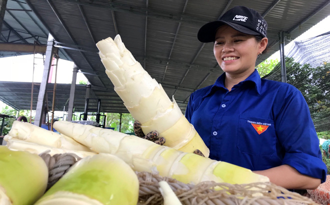 Xã nào của tỉnh Yên Bái chỉ trồng tre bán măng sang Nhật Bản, Đài Loan mà thu 35 tỷ đồng trong năm 2020? - Ảnh 6.