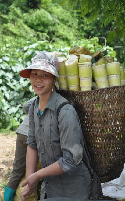 Xã nào của tỉnh Yên Bái chỉ trồng tre bán măng sang Nhật Bản, Đài Loan mà thu 35 tỷ đồng trong năm 2020? - Ảnh 5.