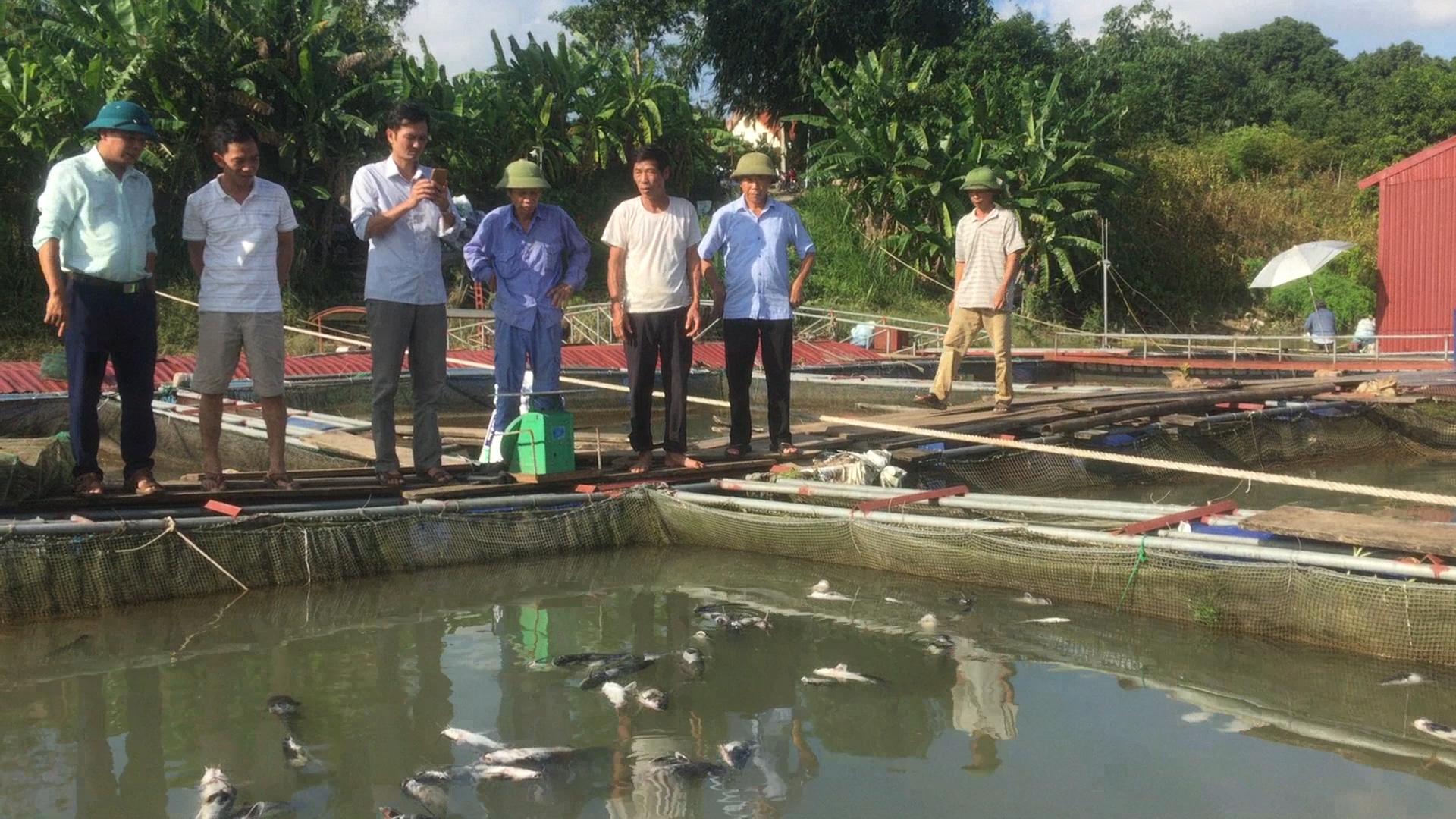 Phú Thọ: Thủy điện Hòa Bình xả lũ, hơn 10 tấn cá lồng sông Đà bị chết - Ảnh 2.