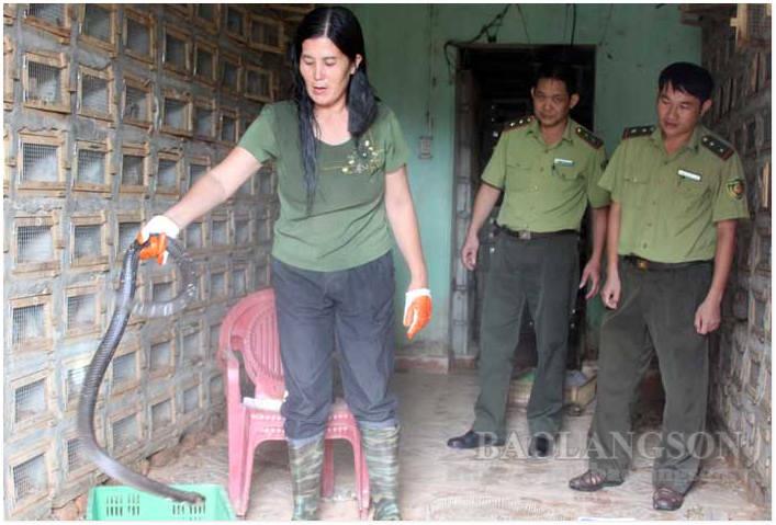 Lạng Sơn: Dân đang nuôi 12.400 con động vật hoang dã nguy cấp, có khỉ đuôi dài, rùa câm và những loài rắn độc nào? - Ảnh 1.