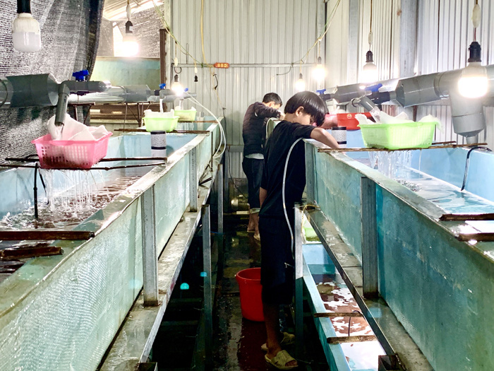 Kỳ lạ, nông dân be bờ đào ao lưng chừng núi nuôi thứ cá đặc sản bán đắt tiền ở Sa Pả, Sa Pa - Ảnh 1.