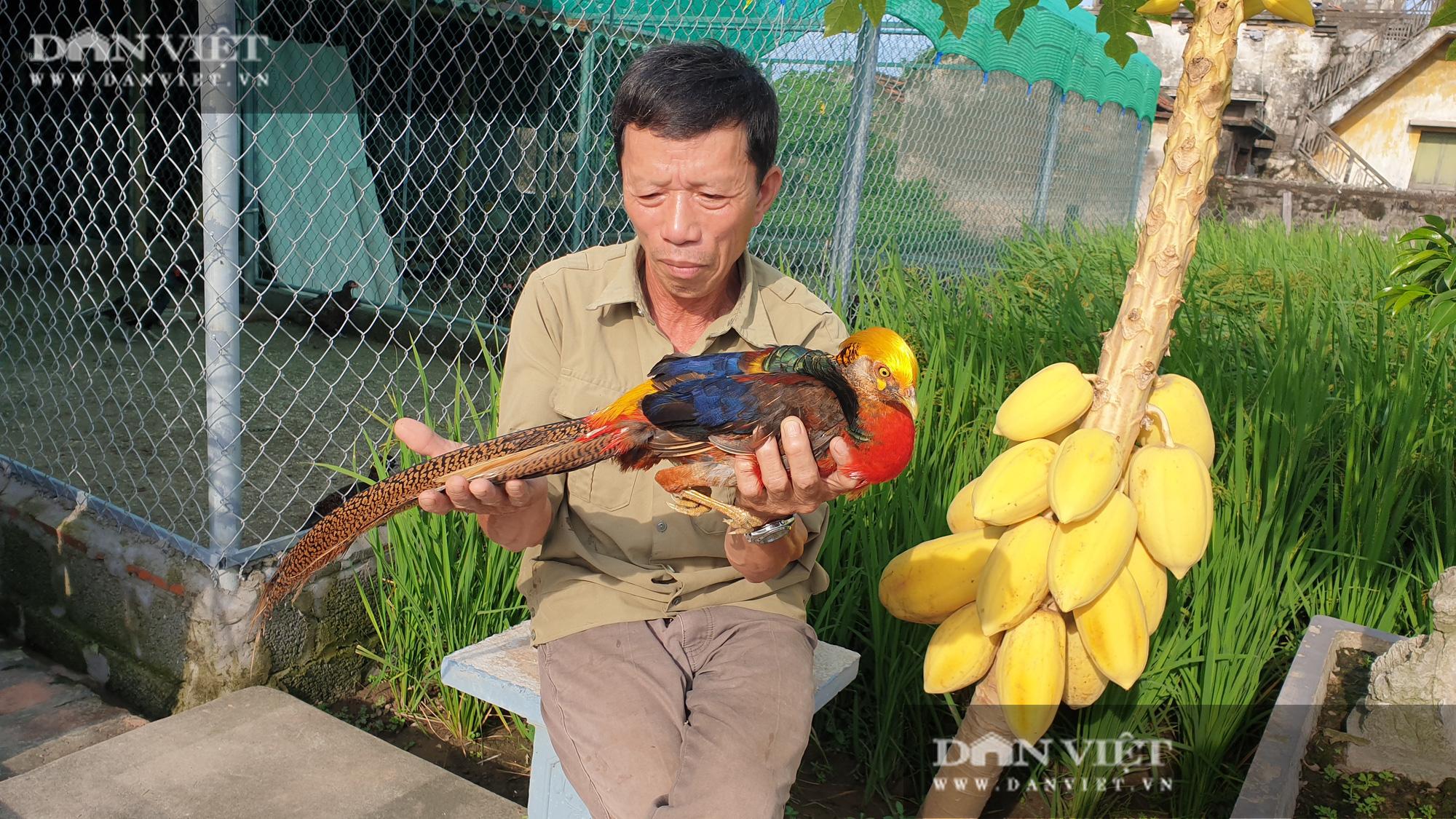 Nam Định: Nuôi đủ loại chim quý hiếm, lão nông đút túi trăm triệu mỗi năm. - Ảnh 2.