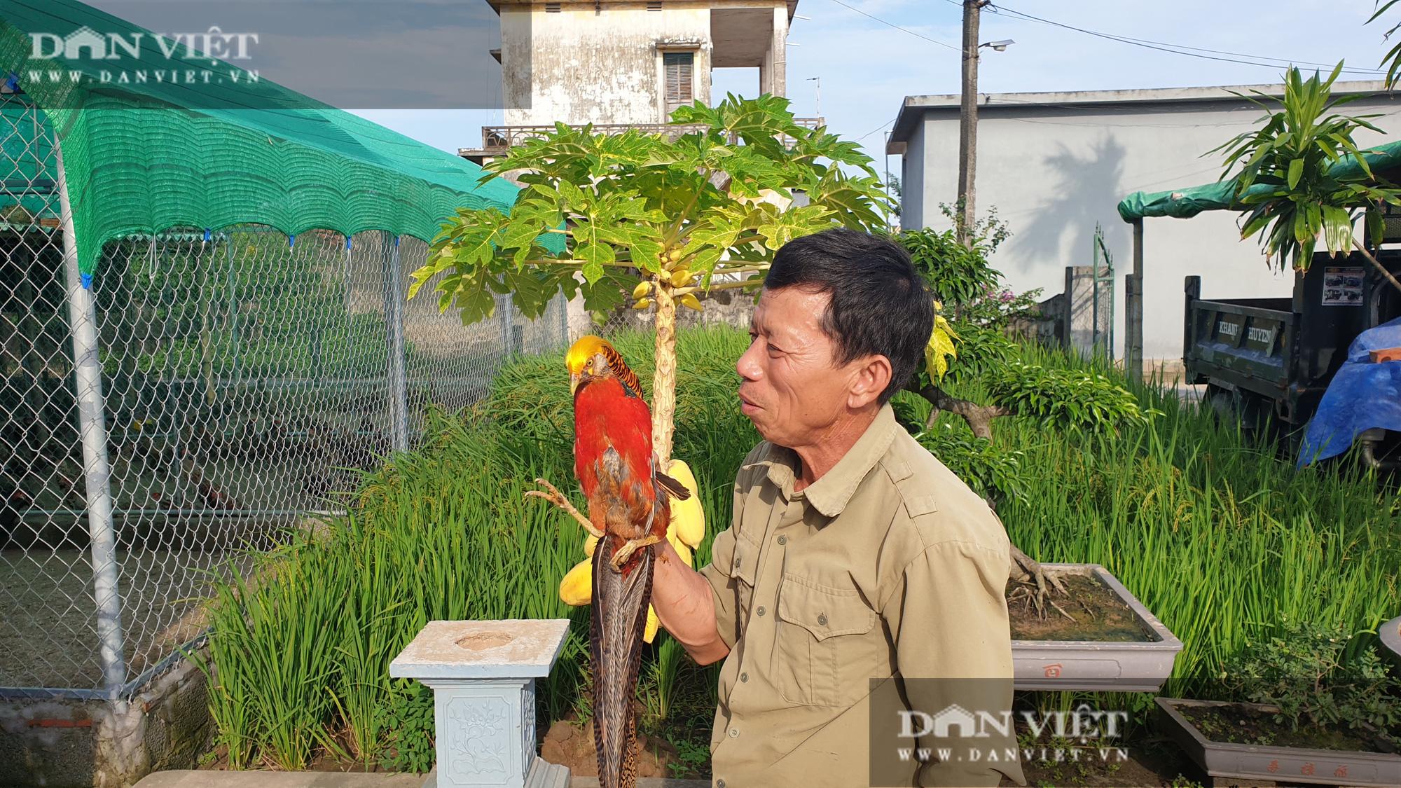 Nam Định: Nuôi đủ loại chim quý hiếm, lão nông đút túi trăm triệu mỗi năm. - Ảnh 7.